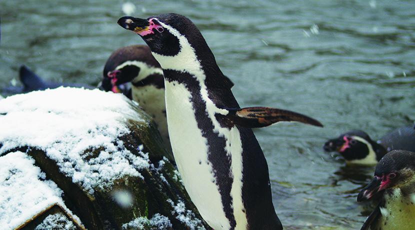 Twycross Zoo unveils Christmas activities