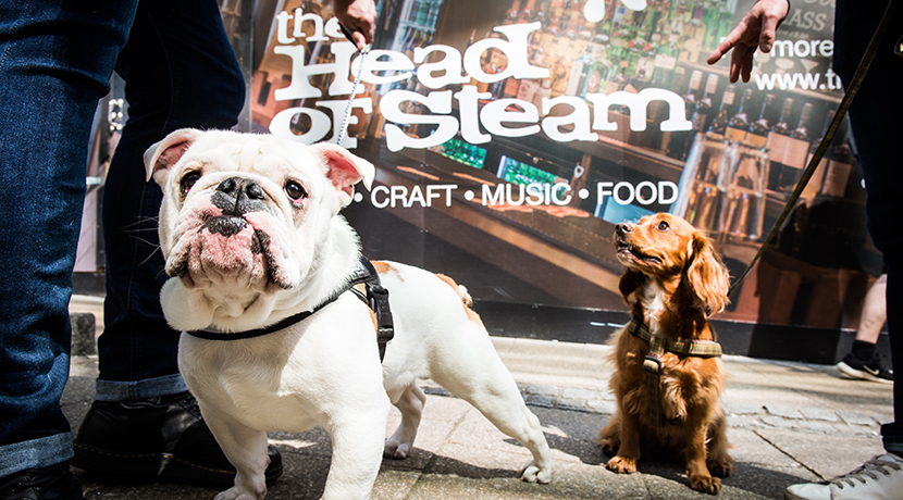 Dog friendly, city centre bar to open on Temple Street