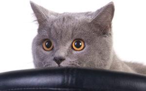Чем вывести с ковра запах кошачьей мочи
