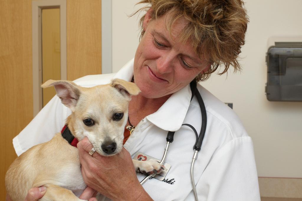 Ветеринар с щенком на руках