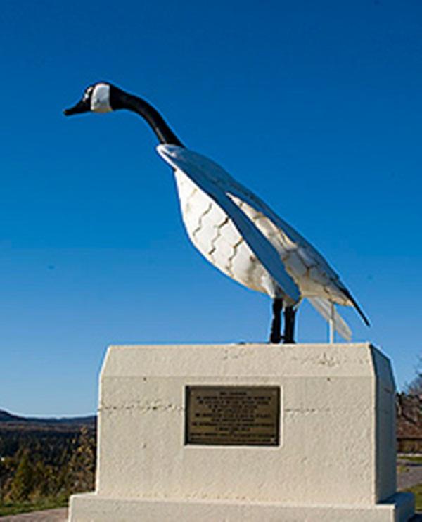 Largest Goose In Wawa