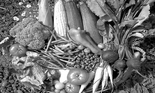 Vegetable_farming