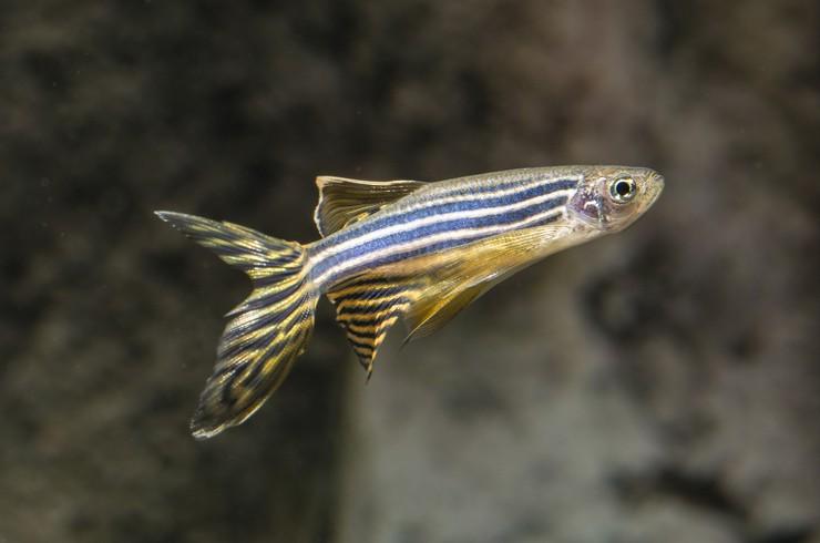 Видеть во сне аквариум с рыбами