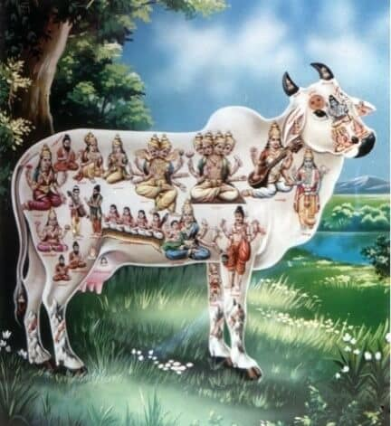 Image of a cow witj hindi gods alll over the body