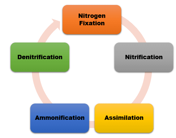 nitrogen_fixation_cycle