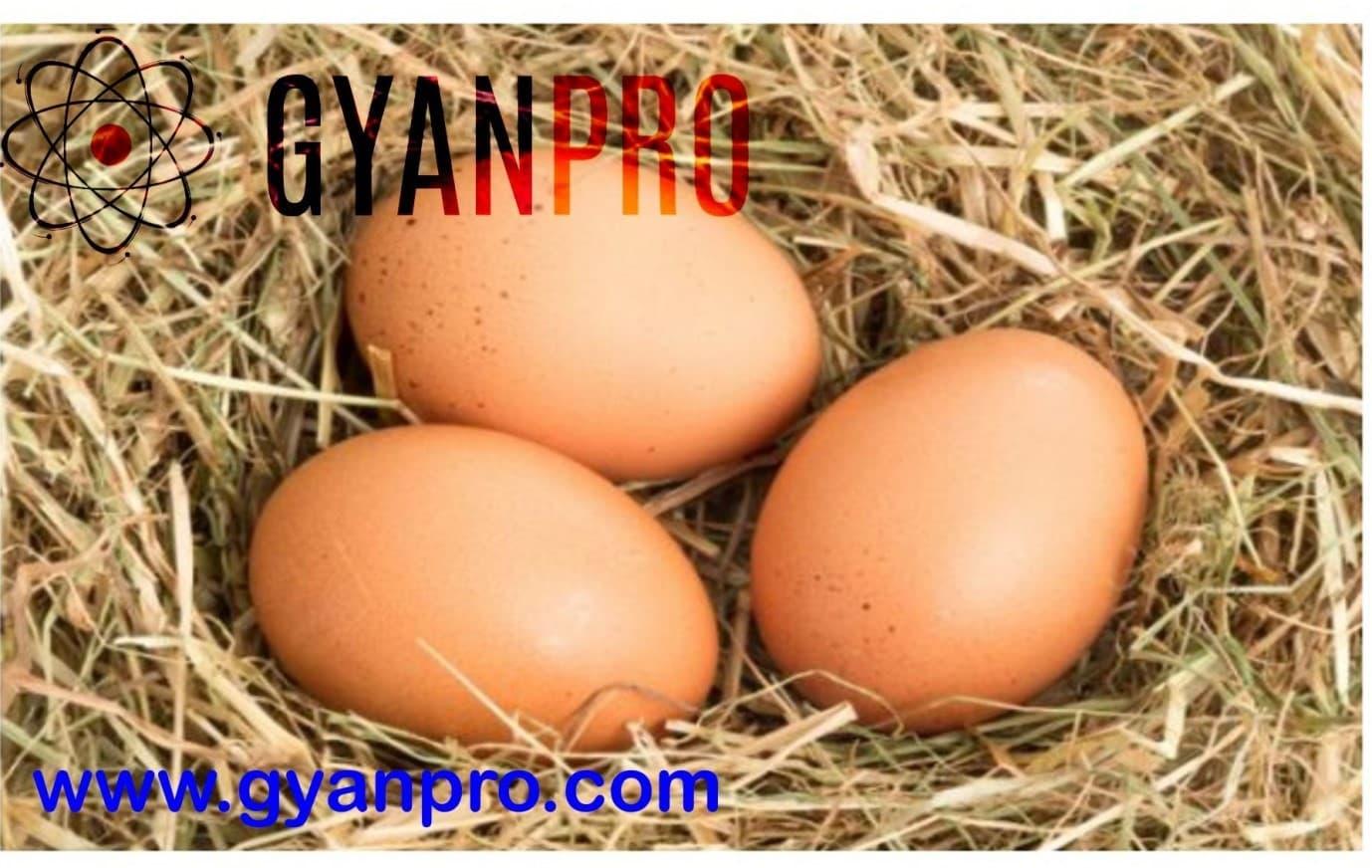 3 eggs in a chiken nest