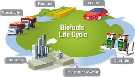 bio-fuel-life-cycle