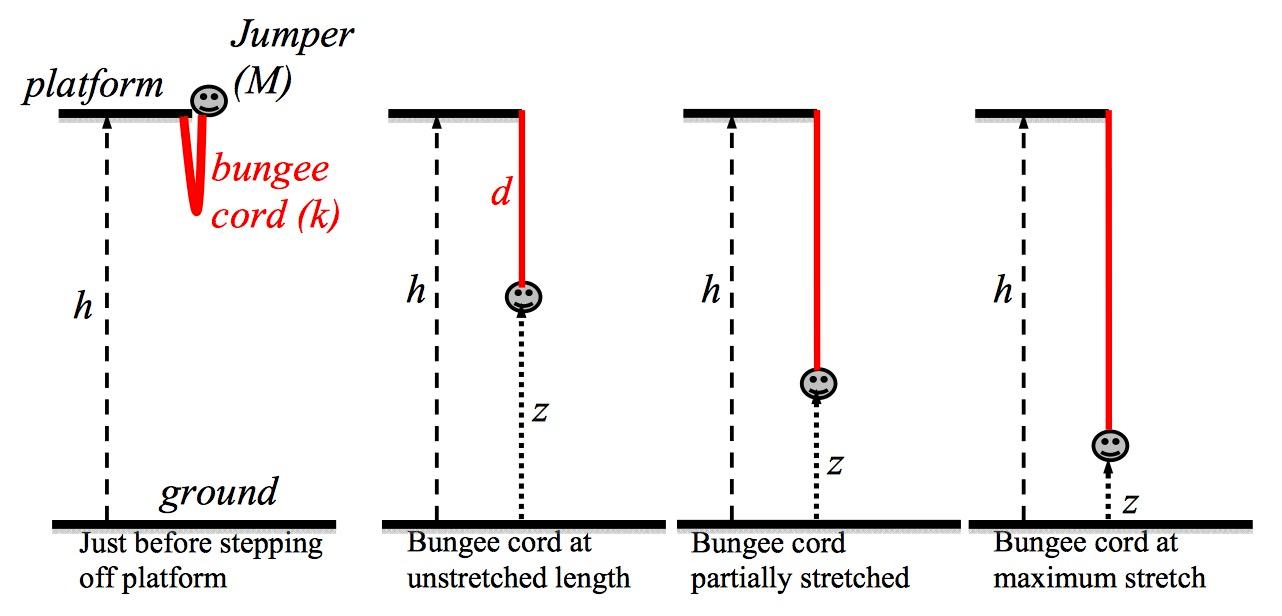 bunjee-jumping-physics