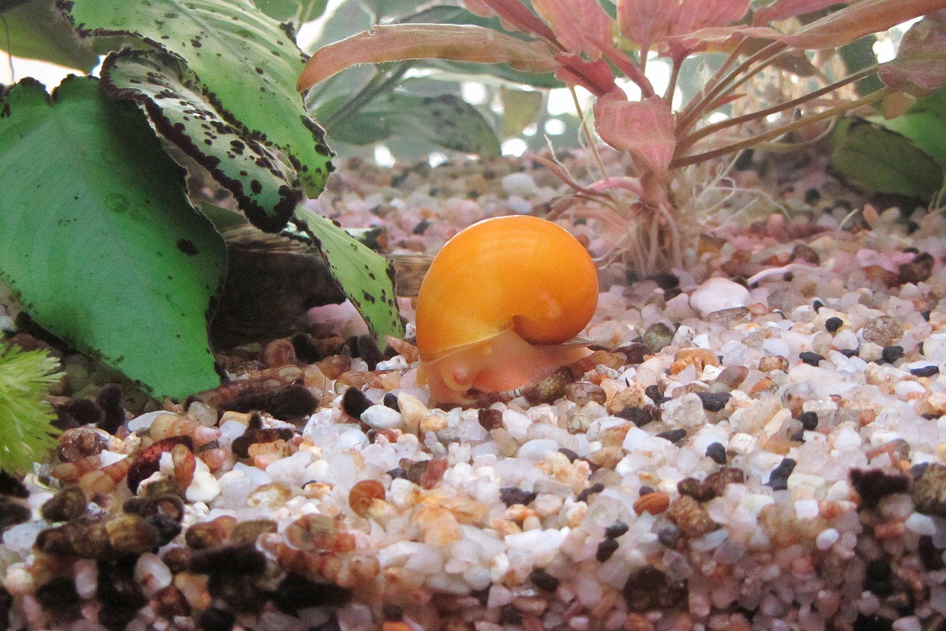 Best way to kill snails in aquarium