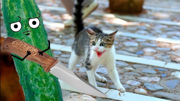 Коты боятся огурцов видео почему