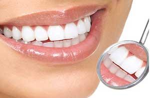Smiling seal dentist