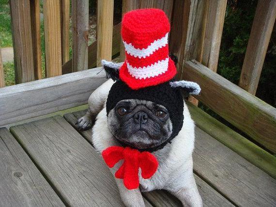 Вязаная шапка для собаки спицами