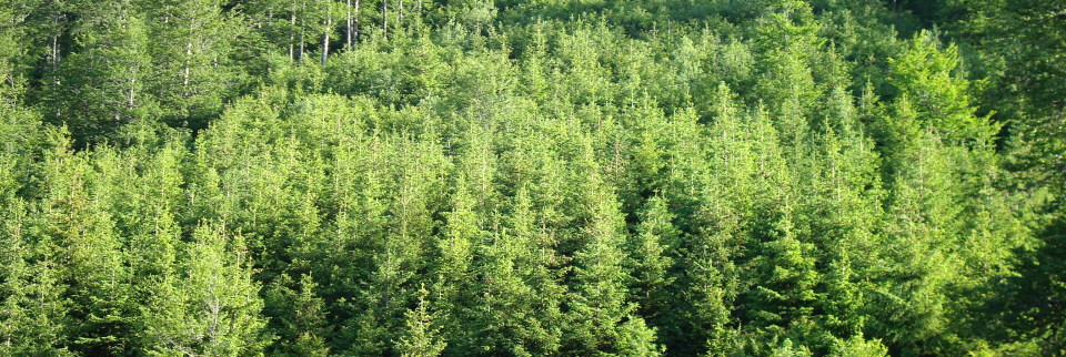 Kosovo's second National Forest Inventory (NFI) is completed.