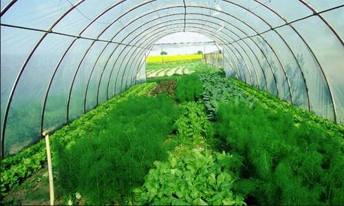 Малый бизнес выращивание зелени