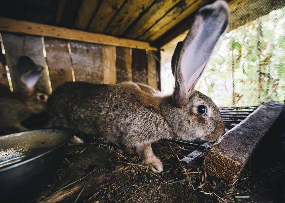 Кроликоферма бизнес план
