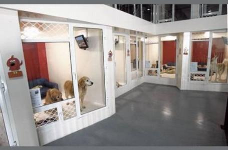 Как открыть гостиницу для животных
