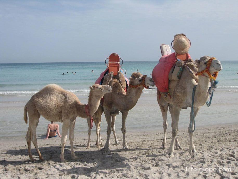 Что можно привезти из туниса джерба и где