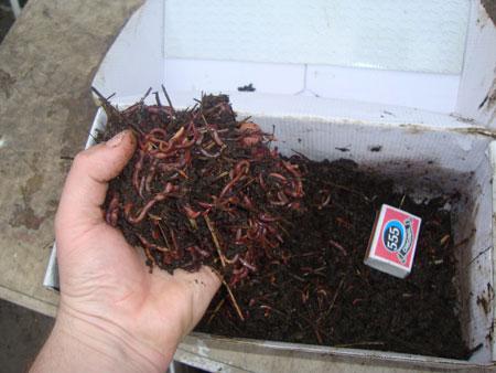 Ферма для червей купить