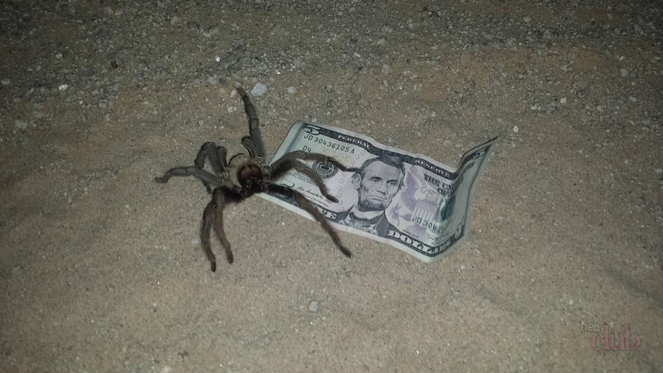 Почему нет пауков в квартире
