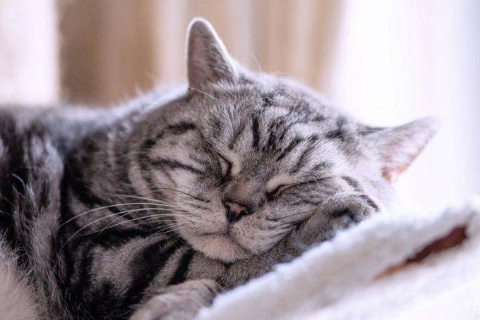 Кошки спят в постели