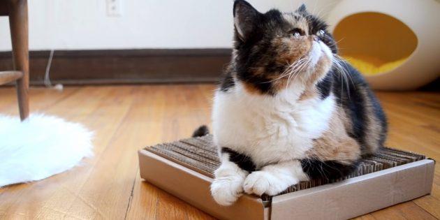 Самодельные когтеточки для кошек
