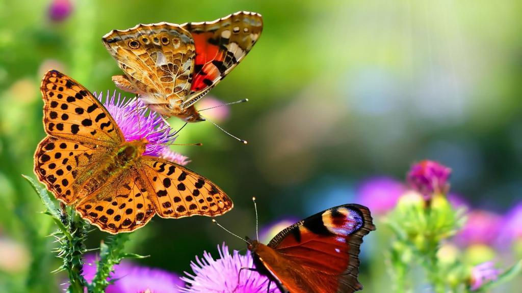 Спасти бабочку во сне