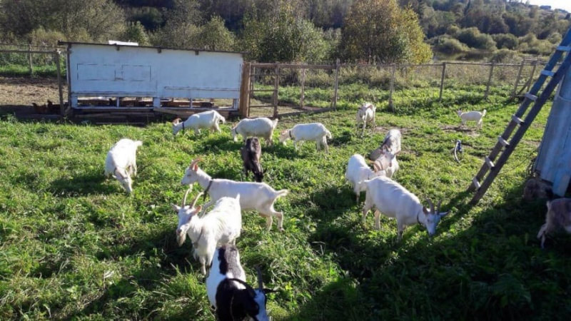 Фермерское хозяйство реализует молоко
