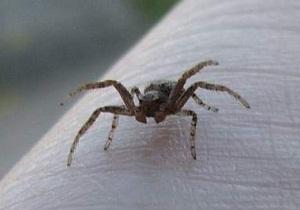 зеленый паук дома