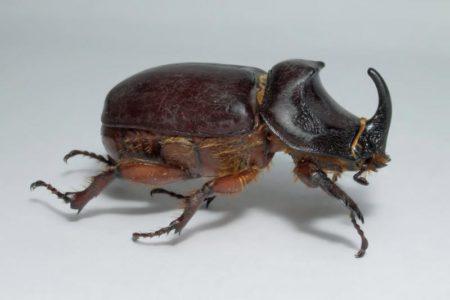 К чему снятся жуки на теле человека