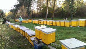 Как заняться пчеловодством с нуля с чего начать
