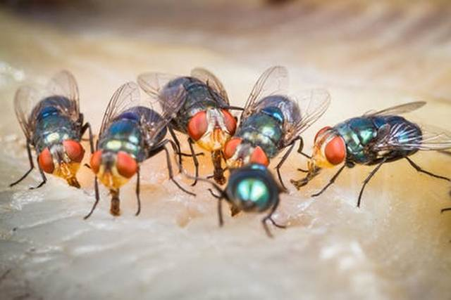 Если снятся мухи