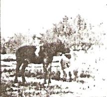 The Little Herdsman