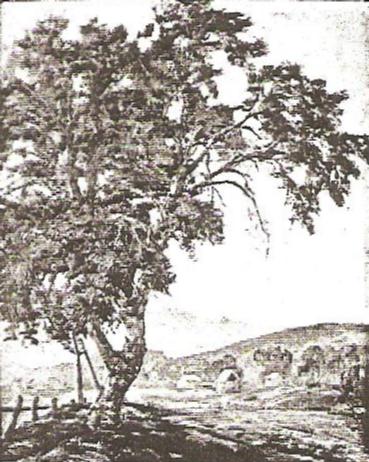 Lone Cottonwood