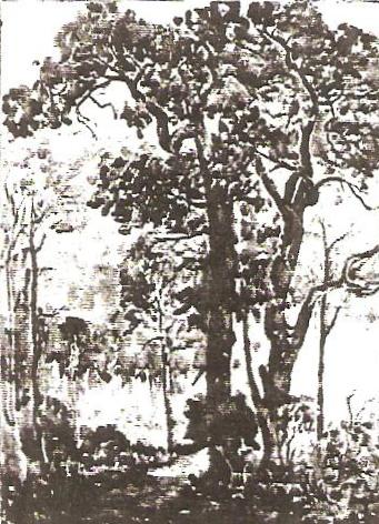 Gnarled Cottonwoods
