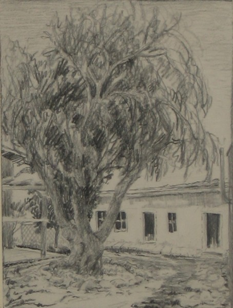 Old Tree and Buildings