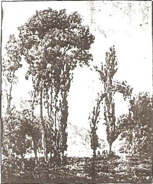 Trees in Spain