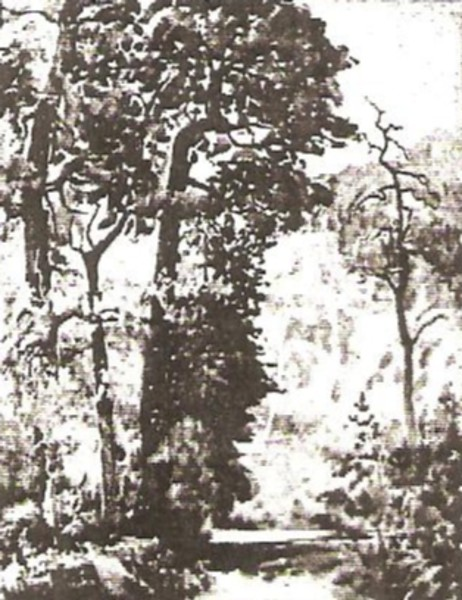 Mountain Woodland