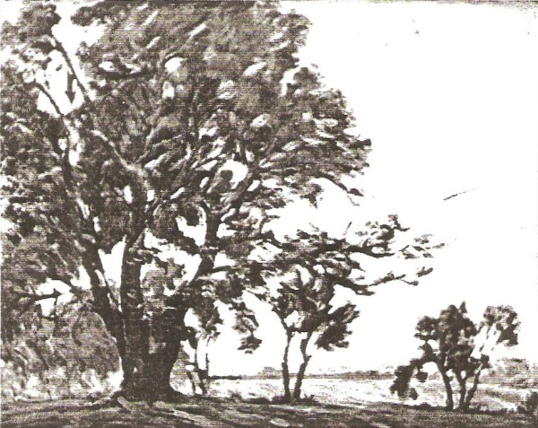 Mormon Tree at Winter Quarters
