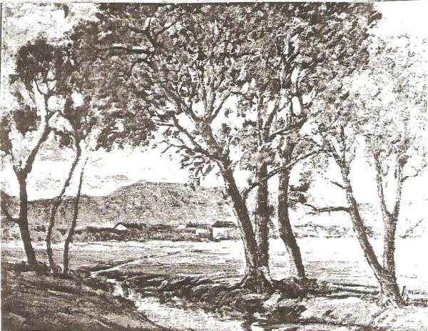 Trees Near Murray