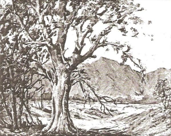 View of Timpanogos