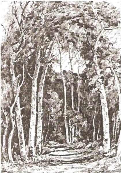 Path Through the Grove