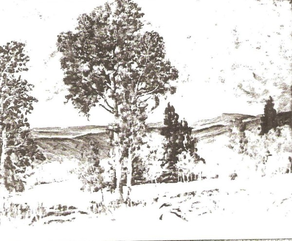 Skyline Aspens on Tucker-Fairview Road