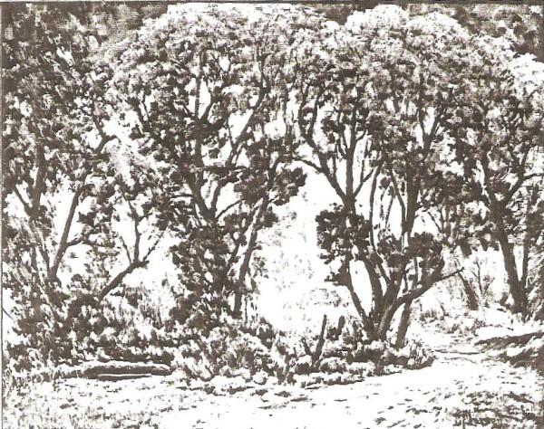 Trees at Vivian Park