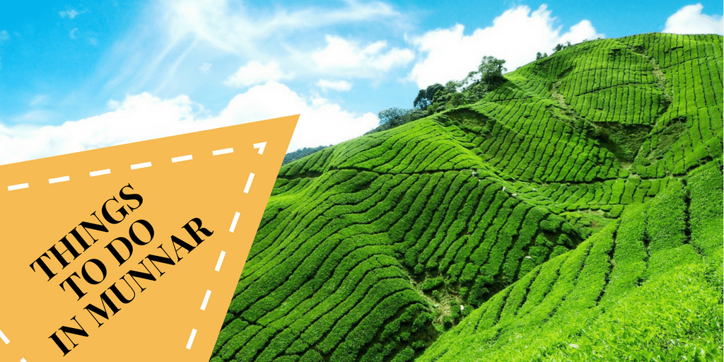 The Best Things To Do In Munnar