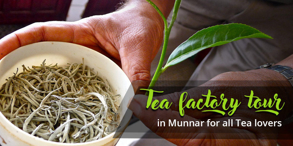 Tea factory tour in Munnar
