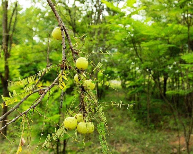 ORGANIC FARMING AT GREENPATH