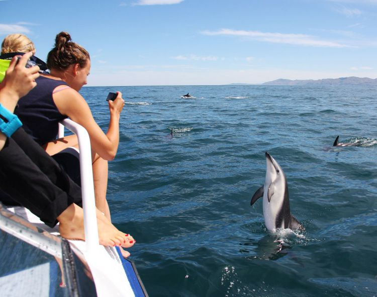 A DAY FOR DOLPHINS
