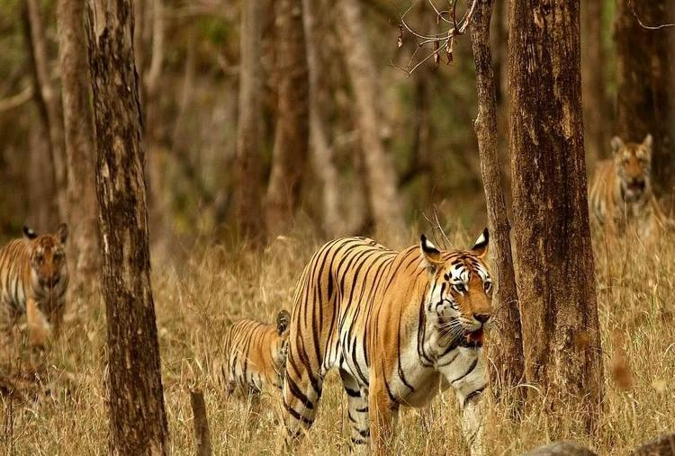 THE PENCH JUNGLE EXPERIENCE
