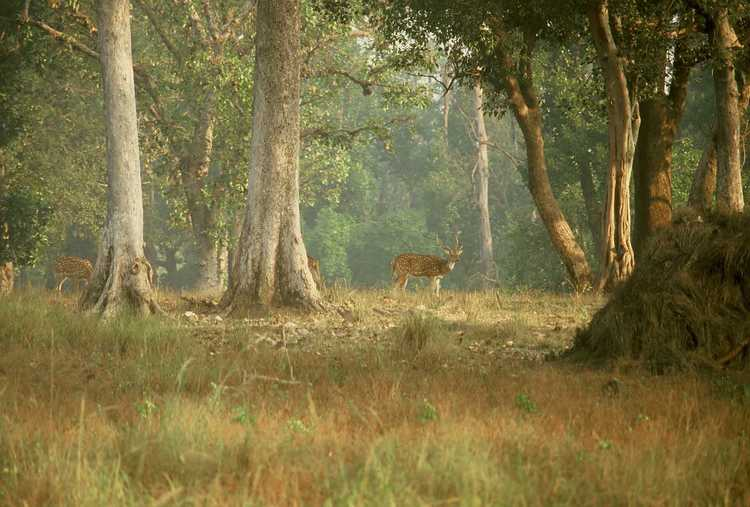 ENTER THE FOREST OF KANHA