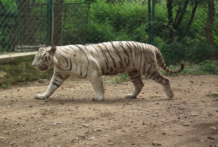 BANNERGHATTA NATURE CAMP STAY
